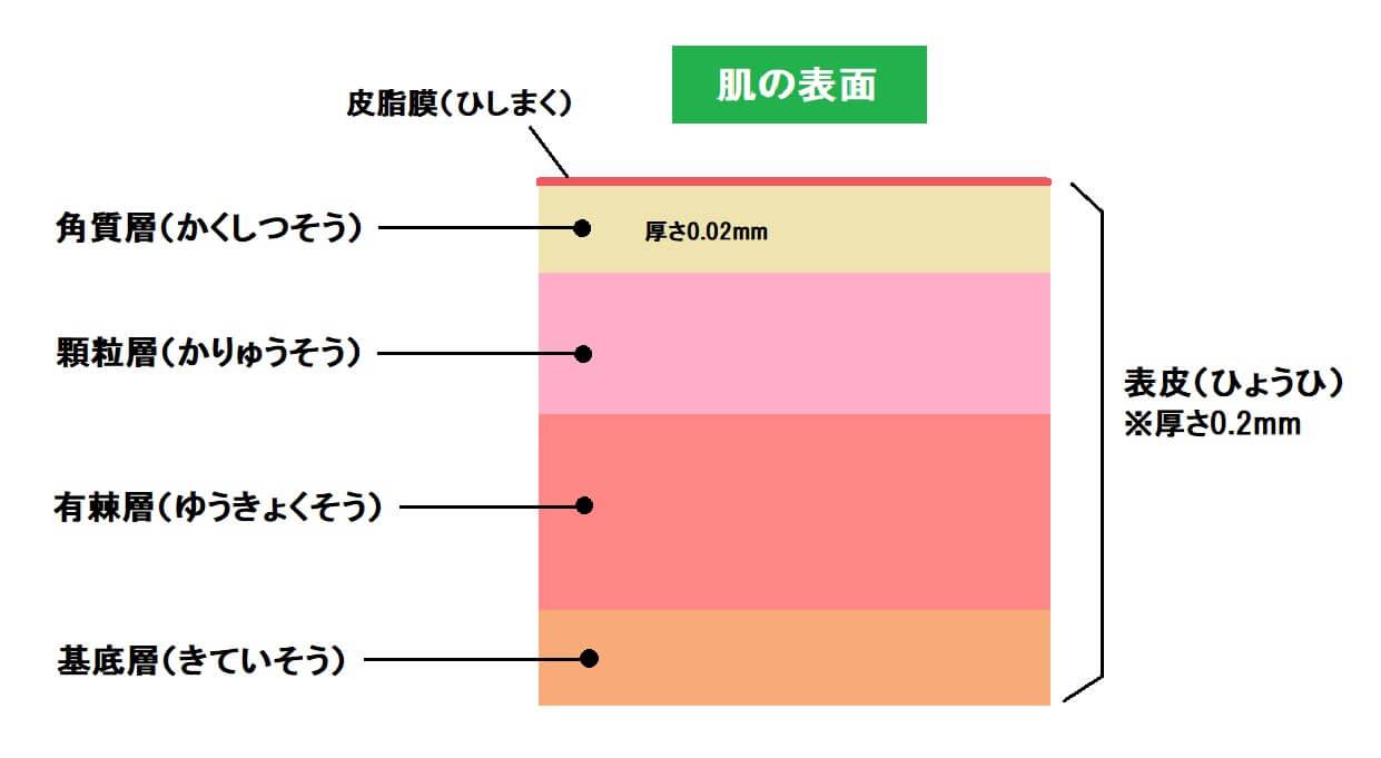 肌の表面図