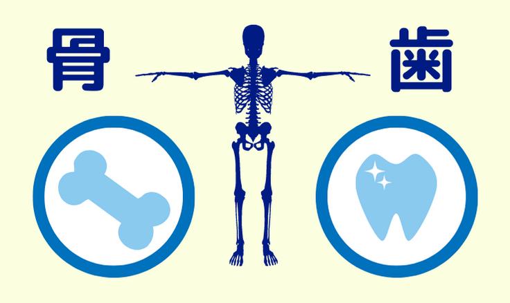カルシウムは骨と歯をつくる
