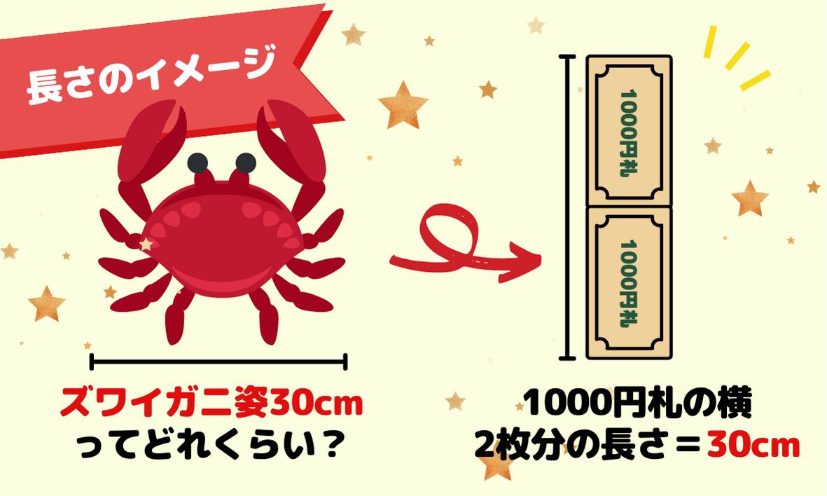 カニ姿30cmはどれくらいの長さ?