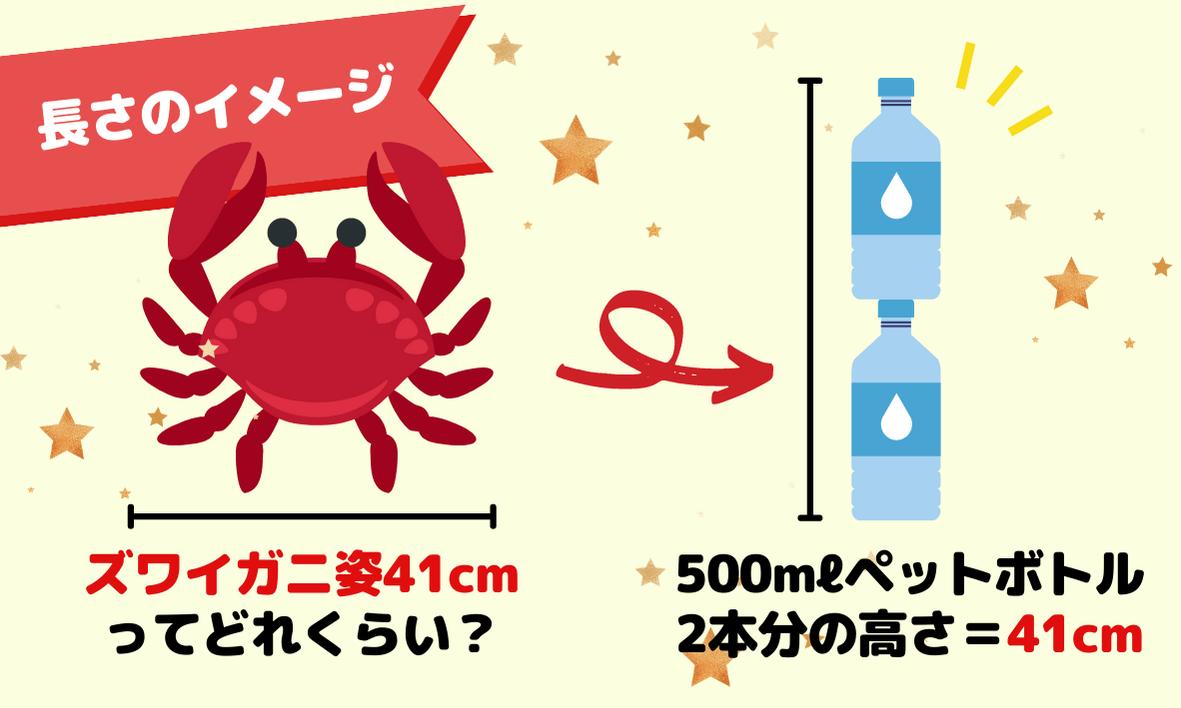 カニ姿41cmはどれくらいの長さ?