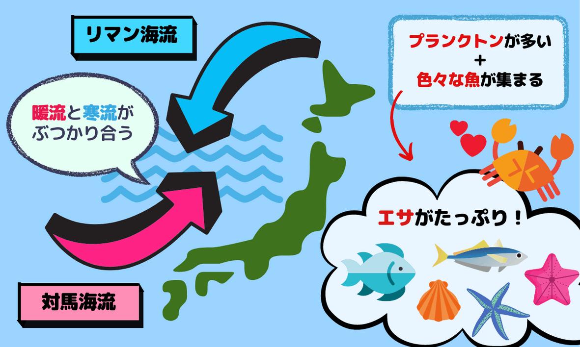 対馬海流とリマン海流がぶつかる場所はカニのエサが豊富