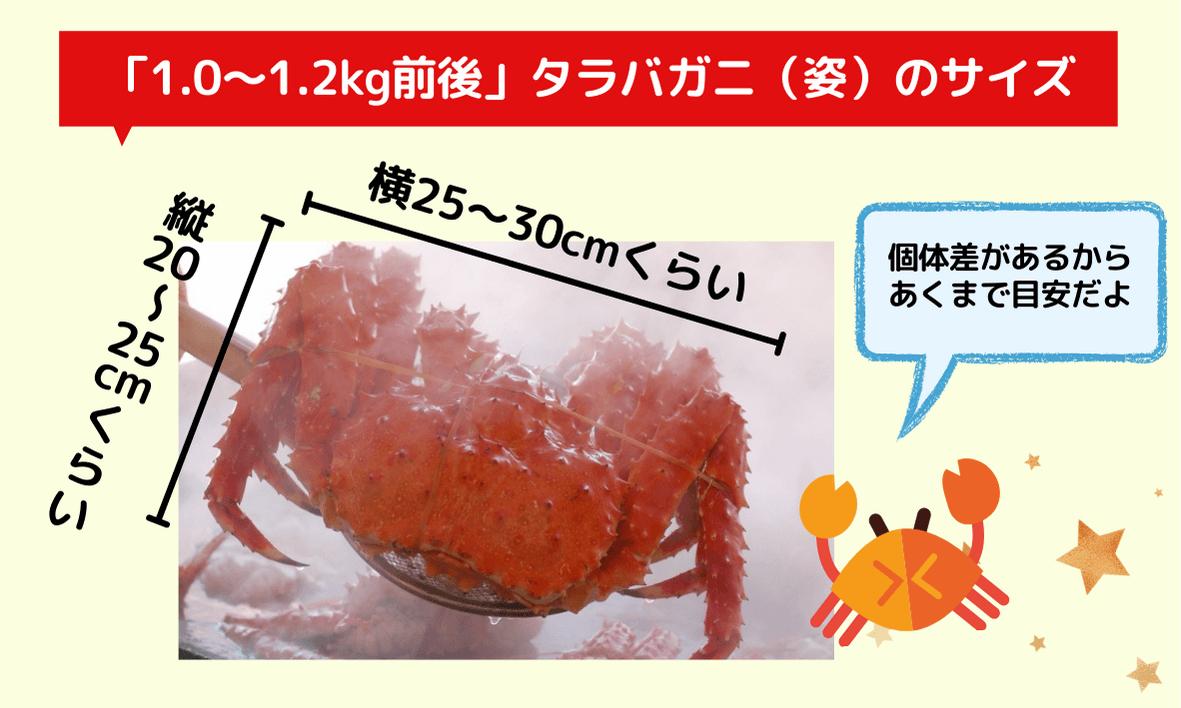 1kg~1.2kg前後のタラバガニ(姿)のサイズはどれくらい?