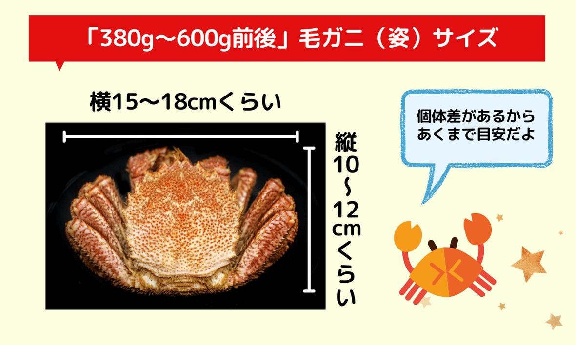380g~600g前後の毛ガニ(姿)のサイズはどれくらい?