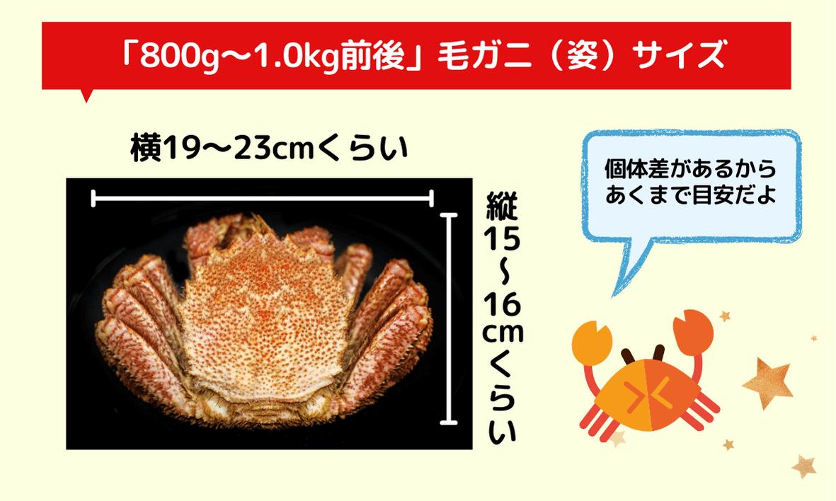 800g~1kg前後の毛ガニ(姿)のサイズはどれくらい?
