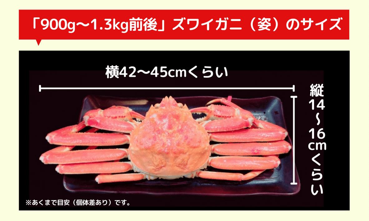900g~1.3kg前後のズワイガニ(姿)のサイズはどれくらい?